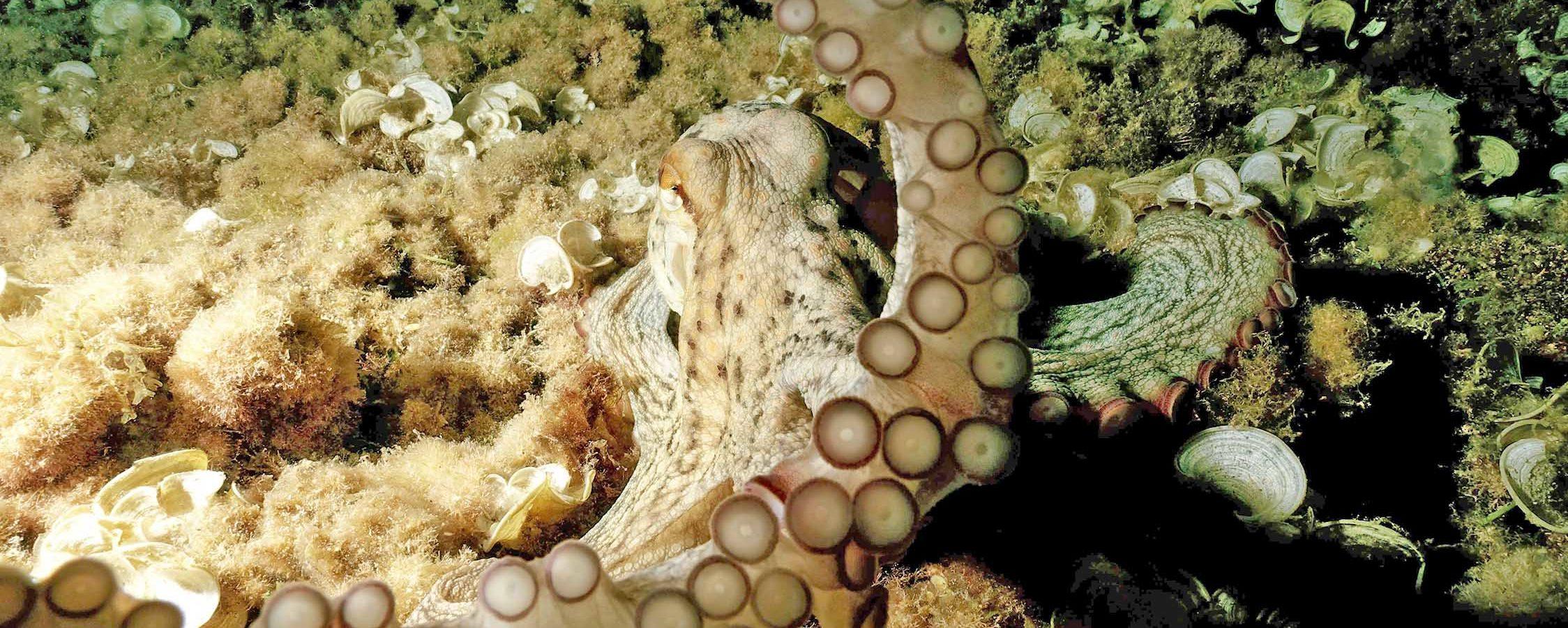 Buceo Bassetes charter snorkel formación Benissa